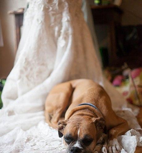 Animais de estimação em casamentos (11)