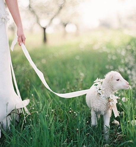 Animais de estimação em casamentos (17)