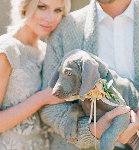 Animais de estimação em casamentos (2)