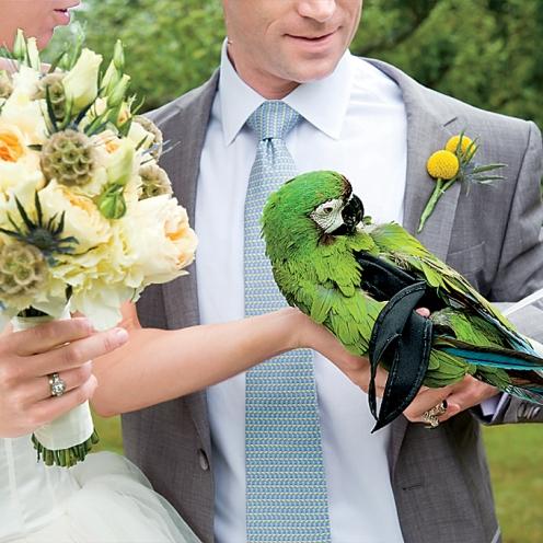 Animais de estimação em casamentos (21)