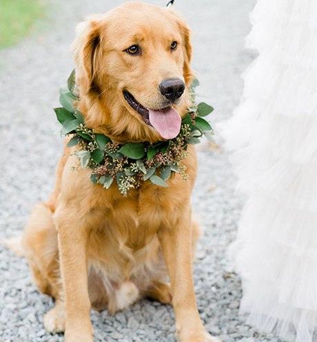 Animais de estimação em casamentos (3)