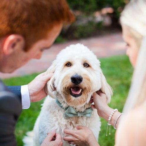 Animais de estimação em casamentos (6)
