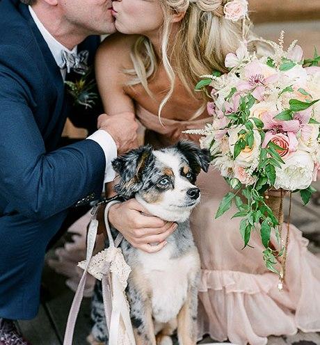 Animais de estimação em casamentos (7)