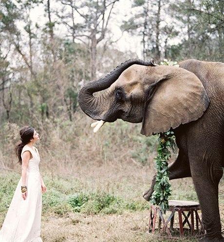 Animais de estimação em casamentos (8)