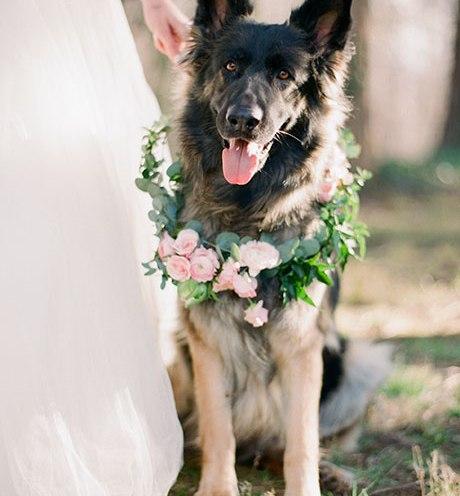 Animais de estimação em casamentos (9)